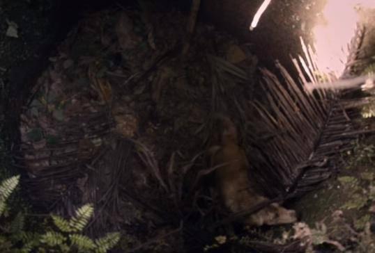 原创主人养的两只鹦鹉被金毛放走,事后还将笼子扔到河里,结局泪目图片