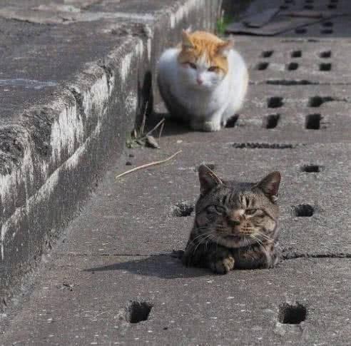 「花猫」,狸花猫迟迟没有回来,主人出去找,找到后笑得肚子疼