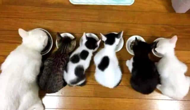 原创 猫咪生下一堆小崽,主人一看肤这色纳闷了:这到底有几个爹啊