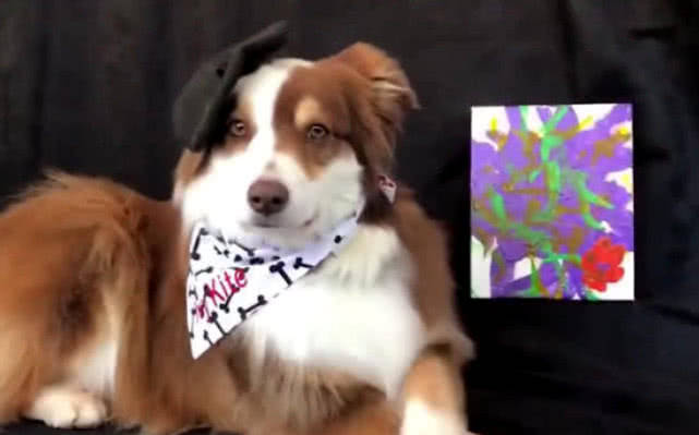 原创 狗狗学小主人画画,看到它画好的制品,网友:未来画家诞生了