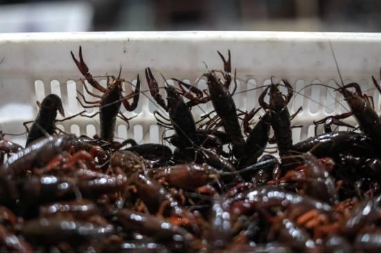 """信良记联手阿里、薇娅推出爱心助农产品——""""夕阳红""""小龙虾"""