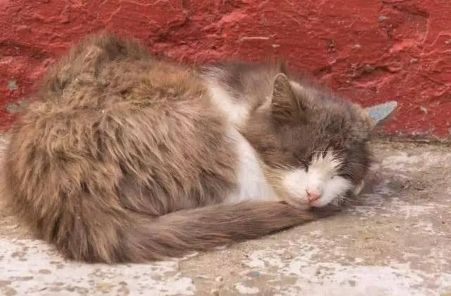 猫舍买的猫想退可以吗图片