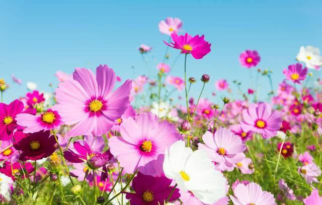六月底,事业如日中天,财神临门,财运朽木逢春,家业兴隆的生肖