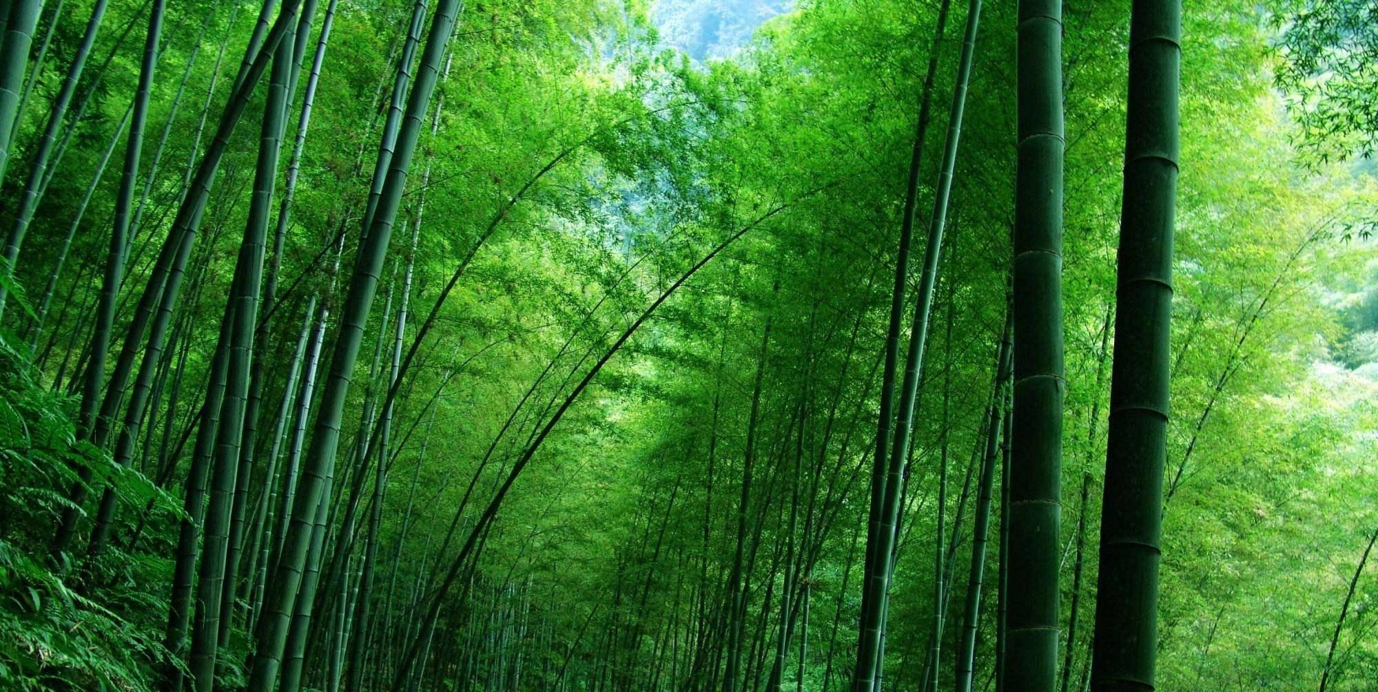 竹林徒步,感受冬日竹林之美图片