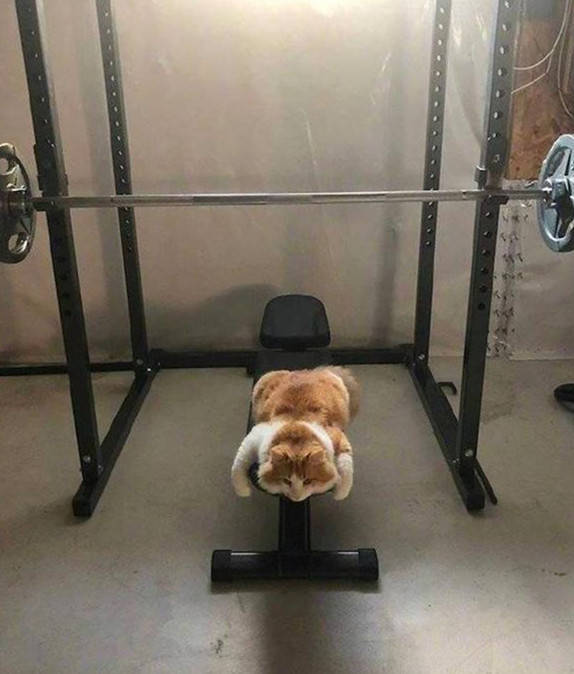 原创 男子刚进健身房,就看到一只肥猫趴在器材上睡觉:画面过于取笑了