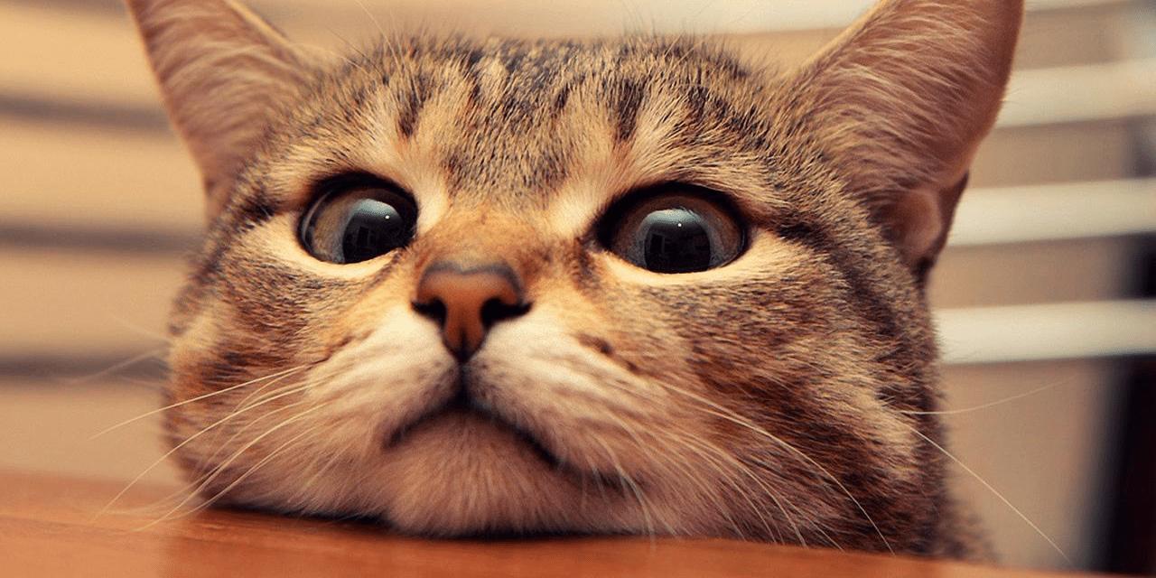 你的终生幸福可能与你的猫咪有关!研究称抱猫拍照让男性魅力降低