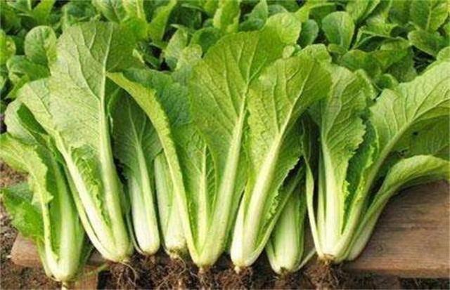 """营养师提醒:夏天的4种蔬菜是""""高盐食物"""",高血压人群要当心 营养补剂 第5张"""