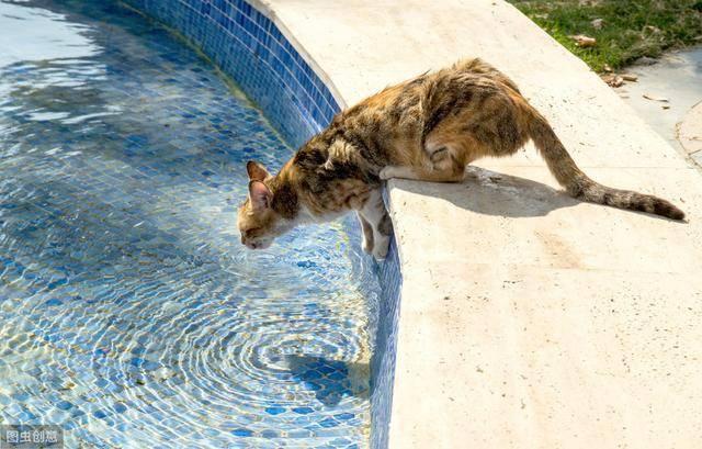 不管猫咪多大,若是突然喝许多水,其实是想告诉你这6件事