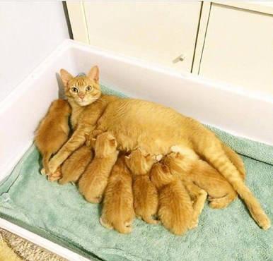 原创 橘猫妈妈生完宝宝后,一度得了产后抑郁症,这个脸色让主人心疼