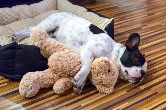 狗狗喜欢睡在那里,能看出主人是否称职?快来看看你中了吗?
