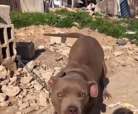 原创 发现一只狗狗被拴在废墟里,本想解救它,走过去一看吓得撒腿就跑
