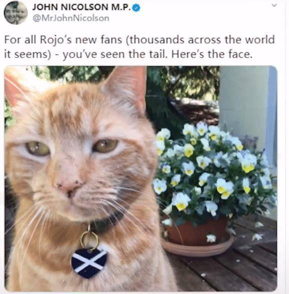 英国议员视频会议被猫尾巴打断