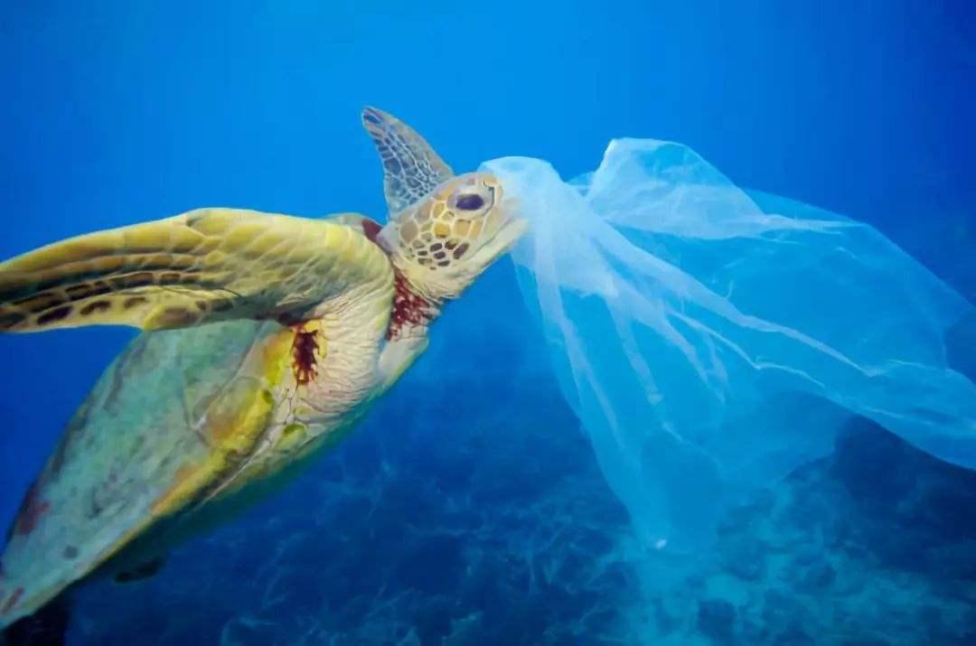 禁塑之风席卷全球 你还在用塑料水管吗?