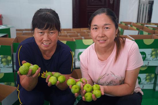 秭归县九畹溪镇:小水果销售难 扶贫企业来帮忙