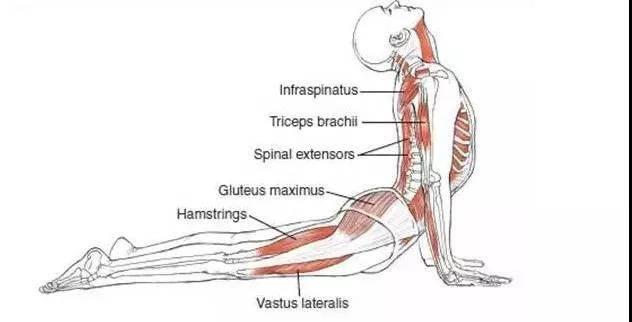 腰椎不好的必看,八个瑜伽体式教你如何养护腰椎,缓解疼痛_锻炼