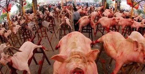 """""""种猪肉""""在已往人们生活条件不宽裕的时候也会被人们食用 请问中"""