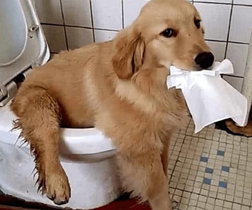 主人尿急想上厕所,进卫生间后却语塞了:这是啥时候学的?