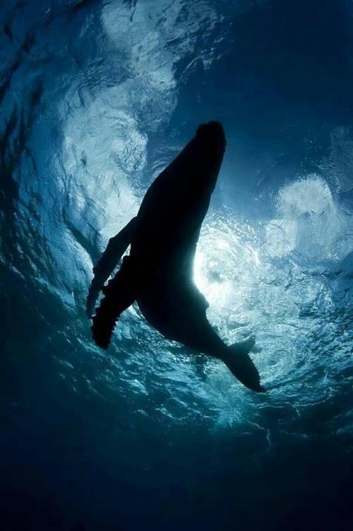 巨鲸落,万物生,给予生养它的海洋最后的温柔