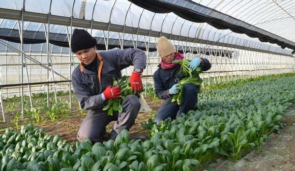 外洋农产物批发市场和国内批发市场有什
