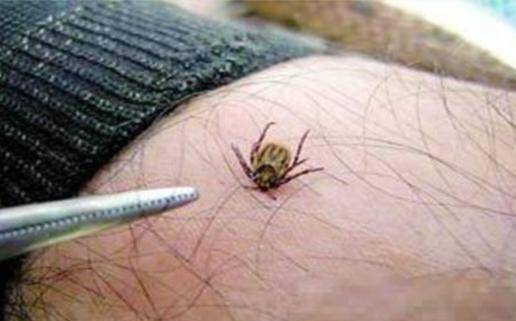 家里有蝗虫怎么办?怎样才能彻底有效地消灭蝗