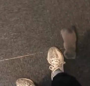 主人下班刚到家,猫咪就撒娇爬到主人腿上,主人心都暖化了