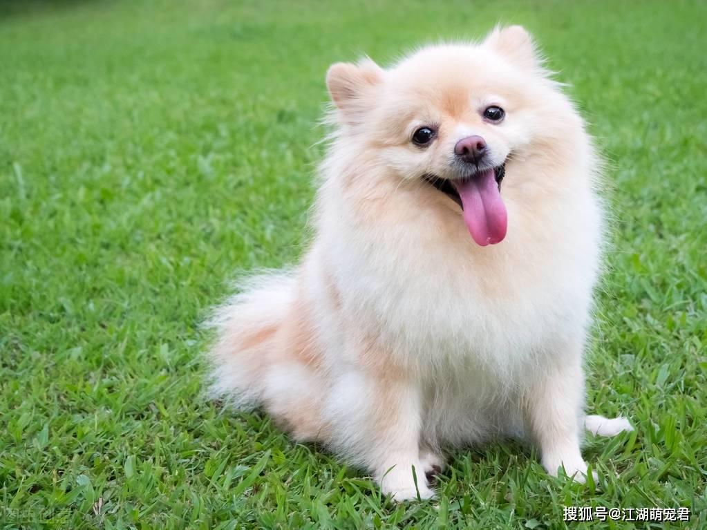 狗狗可以吃蔬菜吗?狗狗喜欢吃什么蔬菜?