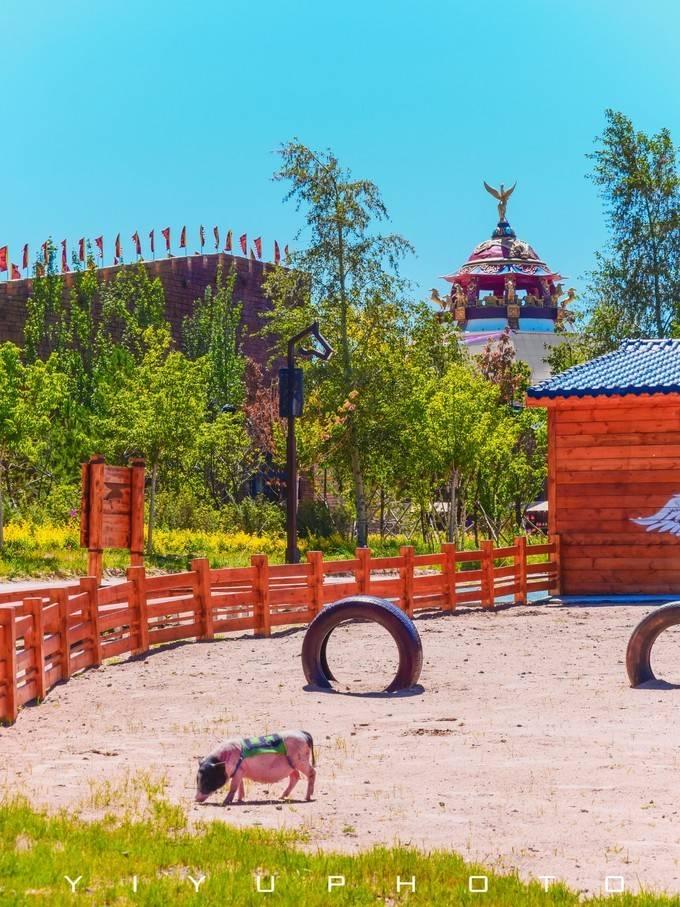 回归大自然的亲子之旅,一起去草原中的梦幻游乐园吧!