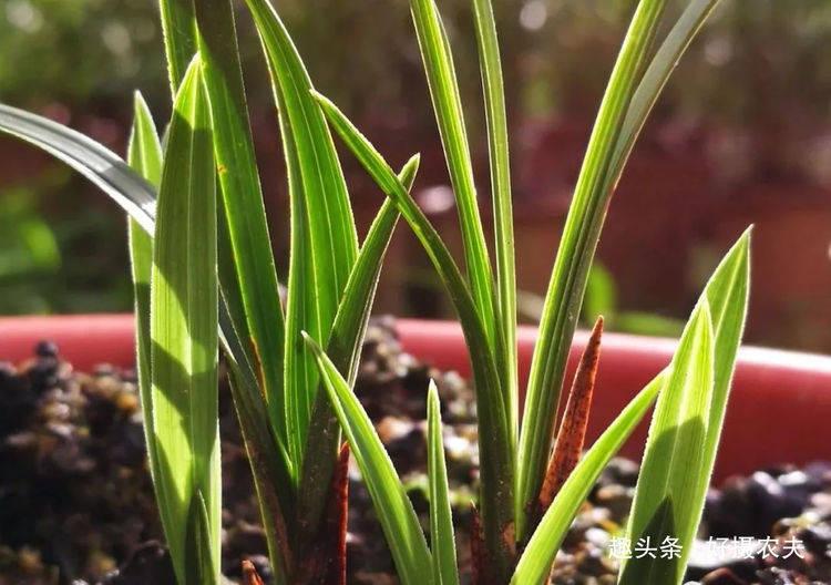 学会寻找兰花的着力点,这是种植兰花的