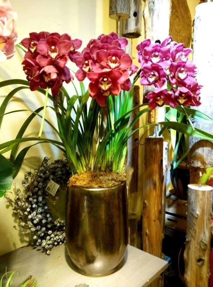 兰花是一种优良的兰花,芳香易养。拿一