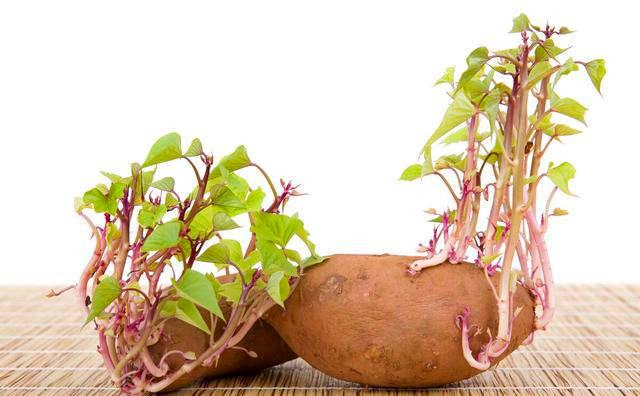 提醒:4种伤身的蔬菜,赶紧撤离饭桌,有些人却当成宝天天吃