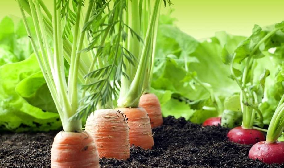 常吃胡萝卜好处多多,改善贫血、养颜护肤、偏偏很少人喜欢吃