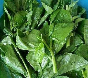 农村有3种野菜到处都是, 缓解感冒发热、慢性气管炎、扁桃体炎