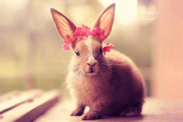 从九月到龙云 《兔女郎》十年愿望终于实