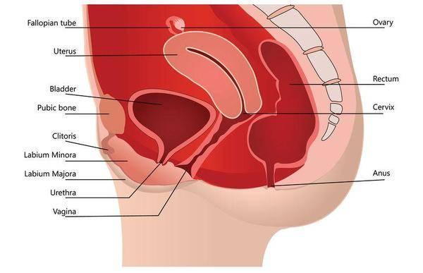"""一旦患上子宫肌瘤,坚持""""4吃、2不吃"""",肌瘤或许能慢慢""""消失"""""""