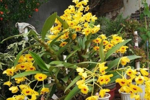 老年养花胜于兰 今年有78朵花