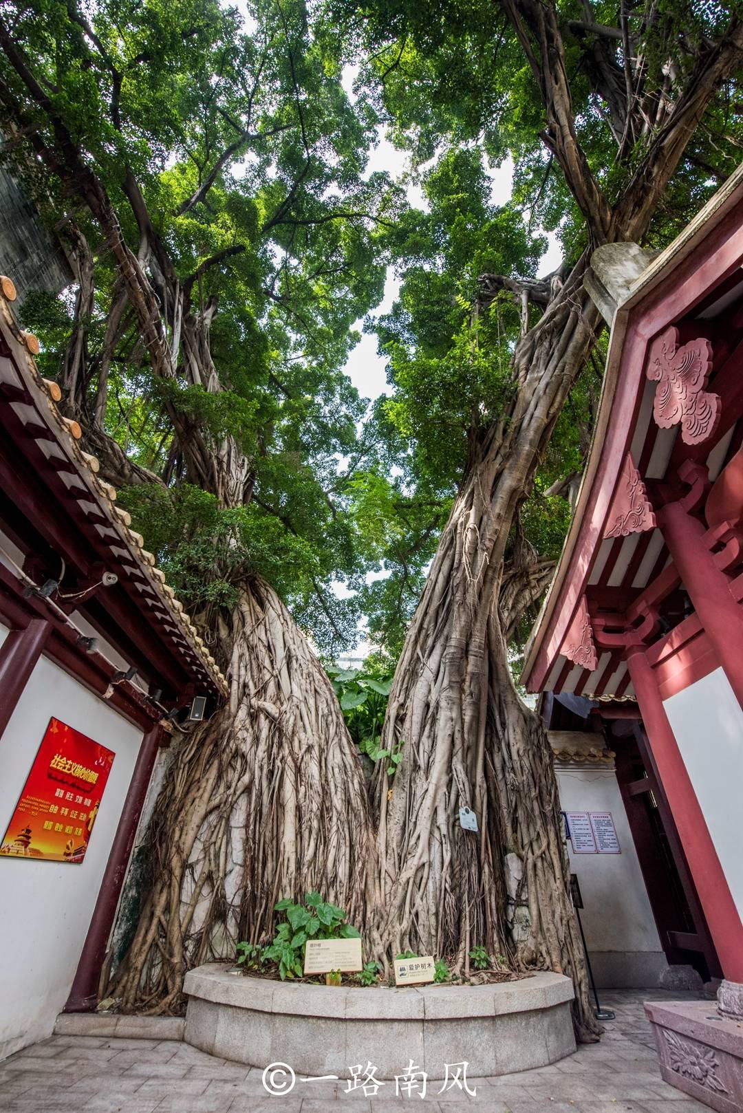 原创             广州原来也有西湖,免费开放却游客稀少,曾是皇帝炼丹求仙药处