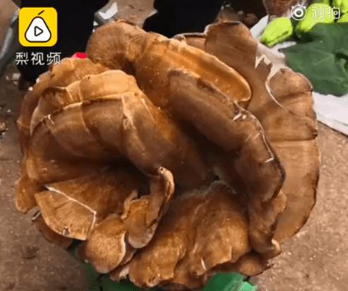 稀奇!昆明一村民捡到2公斤罕见野生菌,尝过后半小时人没事…