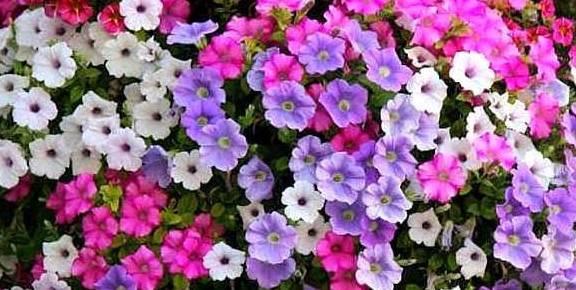 """一个新手养花,就可以举起这五种""""练手"""