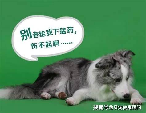 【ror体育下载】 狗驱虫从什么时候开始好? 狗狗注射疫苗的正确时间是什么时候?(图1)