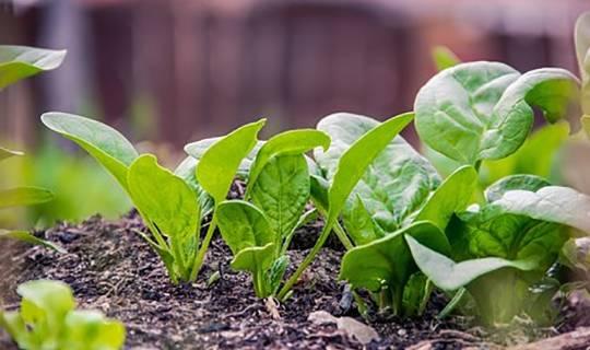 """它是天然的""""补钙菜"""",每天炒一盘,补钙质,长个头,早食早受益"""