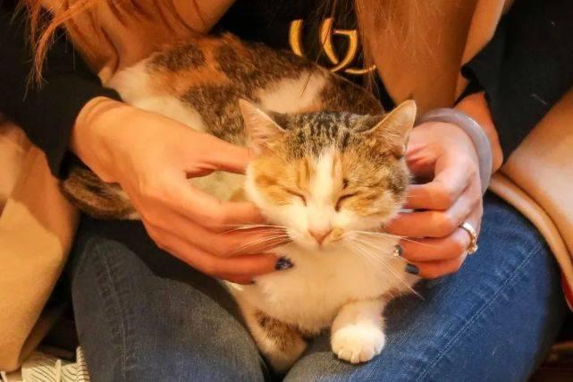 每天舔毛的猫咪,它们的毛发真的健康吗?