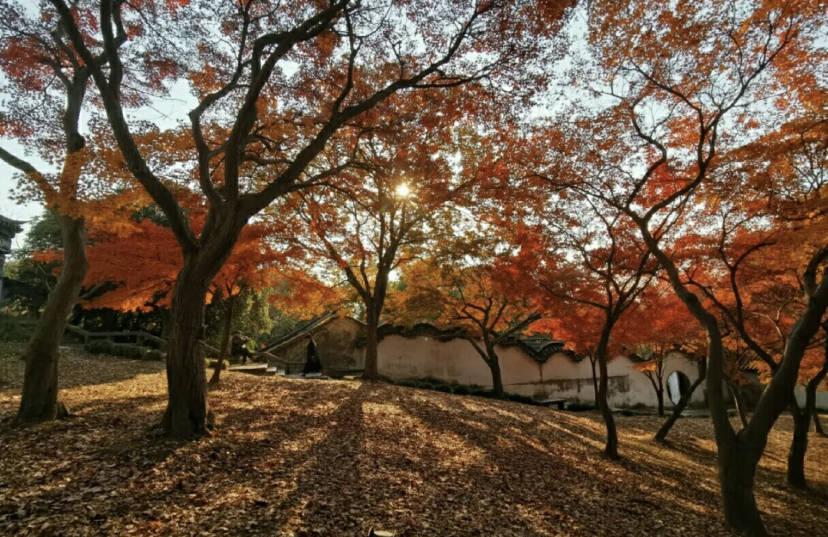 原创             苏州这一宝藏赏秋地,竟是苏东坡的最爱?姑苏醉人秋色你不可错过