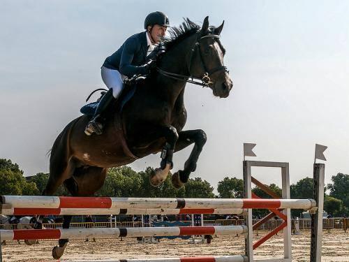 马术中的马匹知识