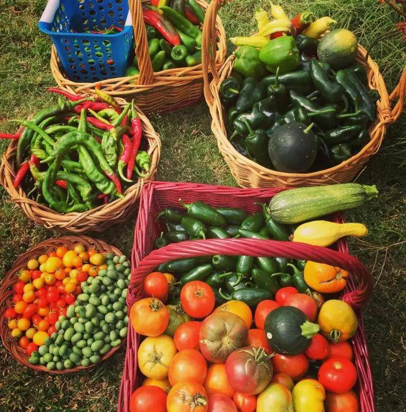 老了,我想有个菜园子:春天播种,秋天收获;低头种菜,抬头看花