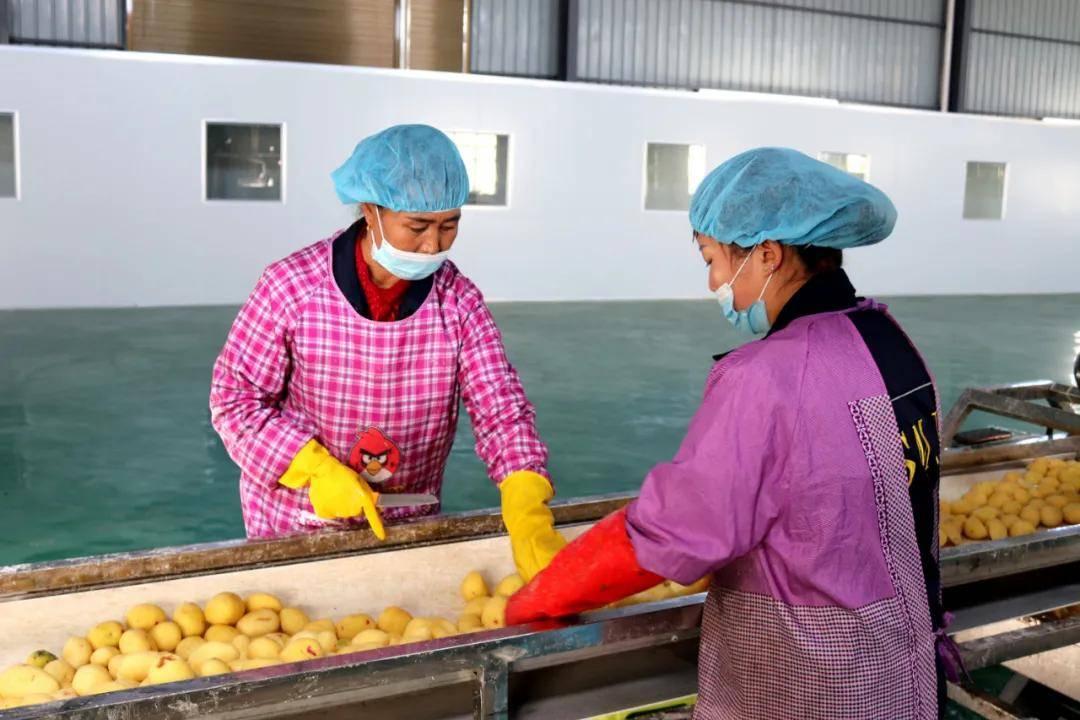 威宁首条马铃薯鲜切薯片生产线正式投产 年产薯片2000余吨