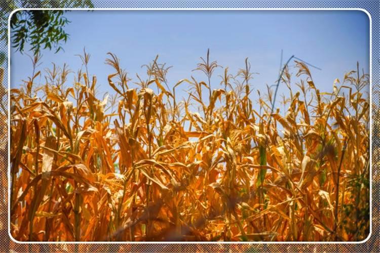 农村20亩土地,种植什么一年能净利润收入10万元?推荐一些 - 老谭创业网