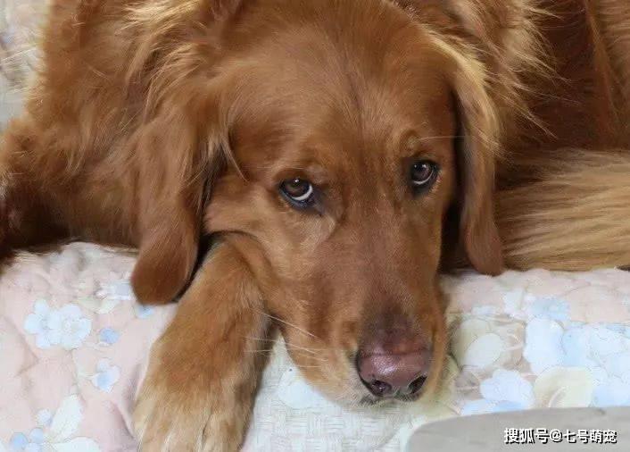 狗狗咬伤孩子,主人准备把狗杀掉,查看监控后,一家人感动得哭了(图1)