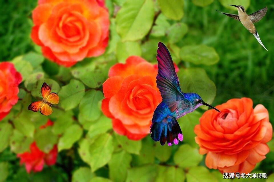 大洋诗歌:除了冻僵的翅膀,我不知道谁能听见我的声音?