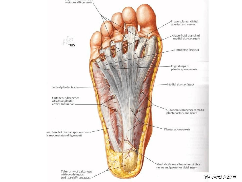 棘爪锁膝踝足矫形器