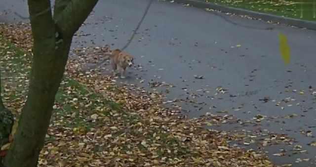 宠物狗狗历经磨难找到主人,发现他已经有了新宠物,只好伤心离开